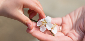 givingflower