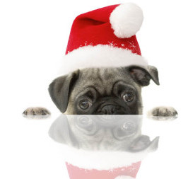 HOLIDAY dog 670x257